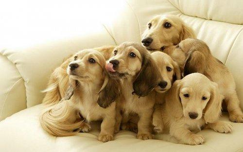 5 dicas para manter seu cão feliz