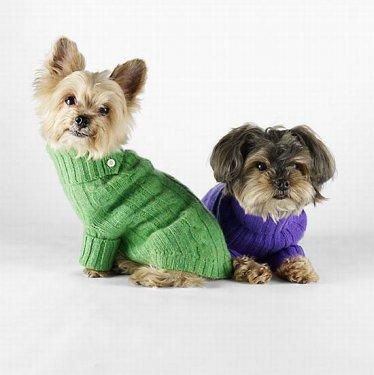 O inverno para os cães