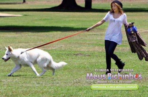 9 erros que donos cometem na hora de cuidar dos cachorros