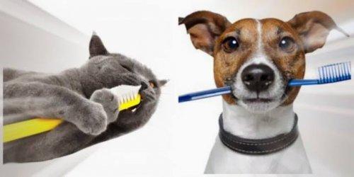 O que é o tártaro canino ou felino?