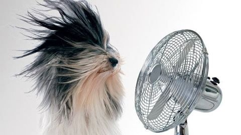 O calor é perigoso para cães e gatos