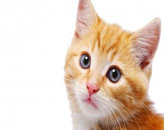 Como os gatos veem o mundo lá fora