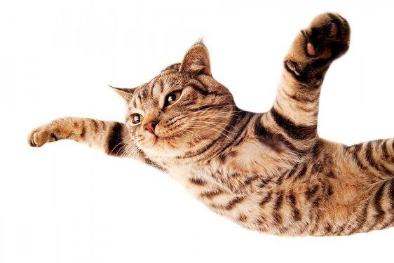 Os gatos sempre caem em pé?
