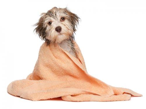 Banho no Frio!