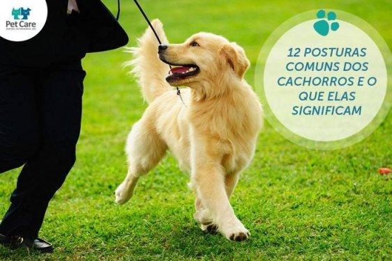 12 Posturas comuns dos cachorros e o que elas significam