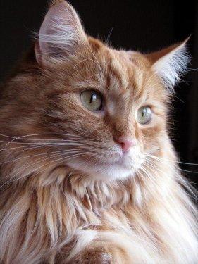 Pêlo do gato