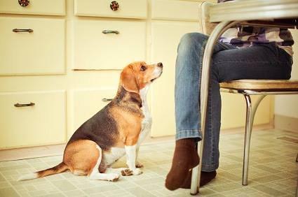 5 Coisas que os cachorros conseguem perceber nos humanos